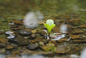 Beginning life in a puddle by Darylpictures