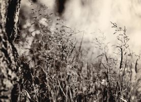 A Detail From My Dream of Summer by Peterix