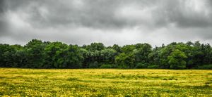 Field Trees Flowers by tpphotography