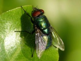 Greenbottle by Sophie4120
