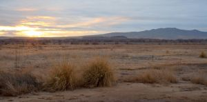 Sunrise in the Bosque by tmulcahy