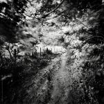 Path In The Forest by soulofautumn87