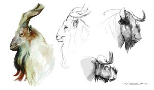 Markhor Wildebeest Studies by Keltainen