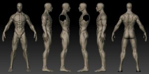 Male 3D Anatomy Template by Shintenzu