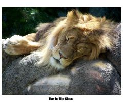 Lion by Liar-In-The-Glass