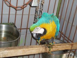 Macaw 05 by dlc-nature-stock