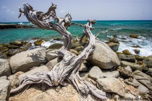 Old dead tree by Tasha0228x