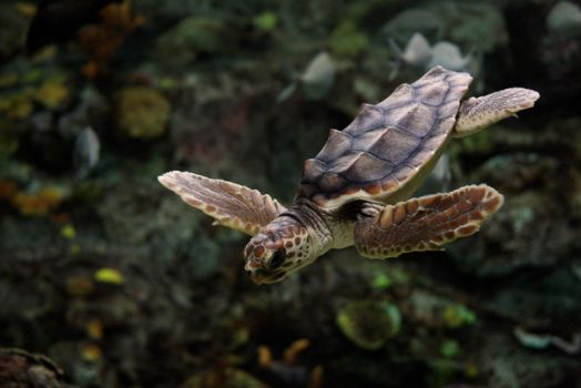 Sea Turtle by blckbaron