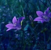 Blue Bells III by Callu