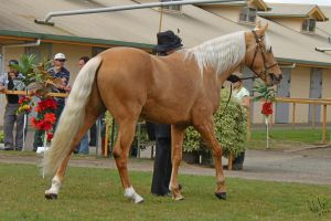 Palomino Stallion by Sooty-Bunnie