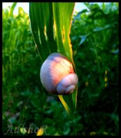 snail by ad-shor