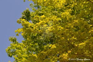 Leaves and Sky by AppareilPhotoGarcon