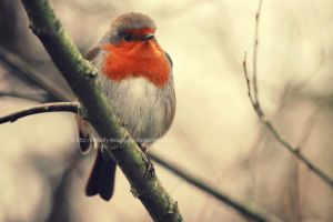 Beauty with-in a Robin by UnrehearsedSplendour