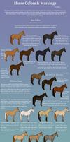 Equine Color and Markings Chart by pipamir