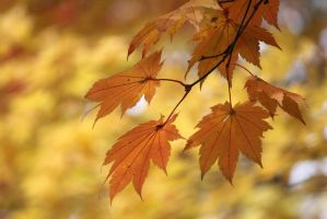 Autumn Leaves 3 by firenze-design