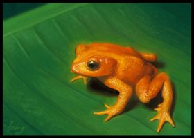 The Golden Toad by whael