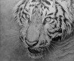 Tiger In Water by WillowDesign