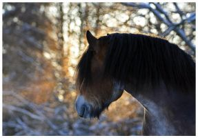 Winter Sun by LovLus