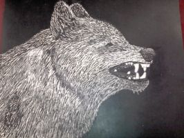 Snarling Wolf Scratchboard, FINISHED by wolves--rock