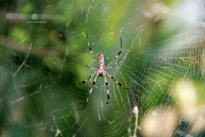 Web of death by 904PhotoPhactory