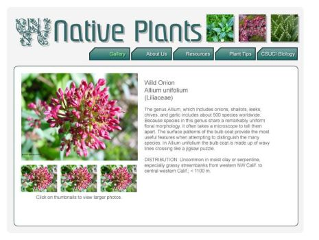 Native Plants of CSUCI Layout2 by vasha
