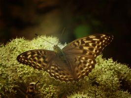 Butterfly on a flower by Korolevatumana