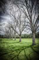 Leafless Trees by whitt107