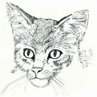 Kitty in Ink by rosethorn