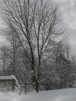 Winter Tree Premade IMG 0482 by WDWParksGal-Stock