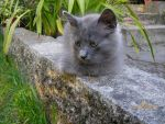 Thinking Cat by Crystal-Clear-