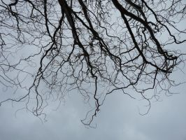 Roots or Limbs by Athos-of-Light