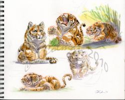 TigerCubs by davidsdoodles