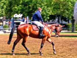 equestrian 08 by Pagan-Stock