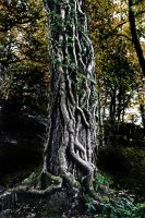 Treeknot Reprise by Coigach