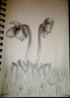 Pitcher Plant Sketch by screameo4