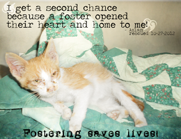 Fostering Saves Lives! by Arixco