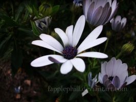 White Flower by Fapplephill