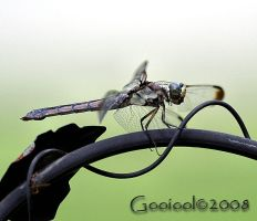dragonfly 8 by Gooiool