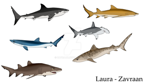 Colored sharks by zavraan