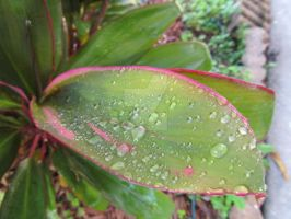 Leave Droplets by MsMcBubble