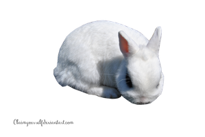 White Rabbit 2 PRECUT PNG Stock by Tris-Marie