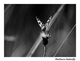 Darkness butterfly by valeriemonthuit