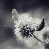 F_8990 by unes