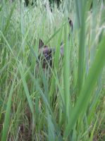 Cat in high grass by Hope555