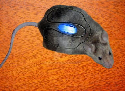 Mouse Mouse by phill-p