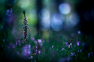 ...Fairies whispers... by ~Econita