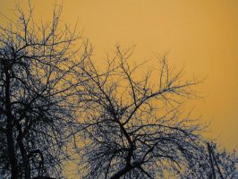 branches by theartofmike