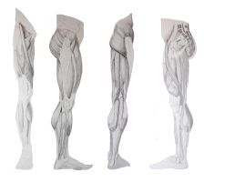 Leg Muscle Reference by Mushitora