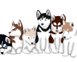 Husky Adoptables 1 and 6 OPEN! 1 AND 6 LEFT by Finchflight