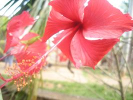 Nicaraguan Flower 4 by Vectriss